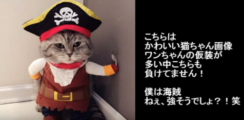 FireShot Capture 59 - ハロウィン仮装の犬猫のかわいいおもしろ画像!~Halloween costume of t_ - https___www.youtube.com_watch