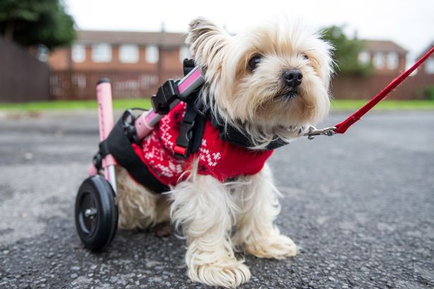 Doggy-wheelchair