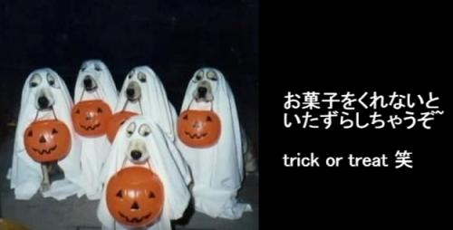 FireShot Capture 58 - ハロウィン仮装の犬猫のかわいいおもしろ画像!~Halloween costume of t_ - https___www.youtube.com_watch